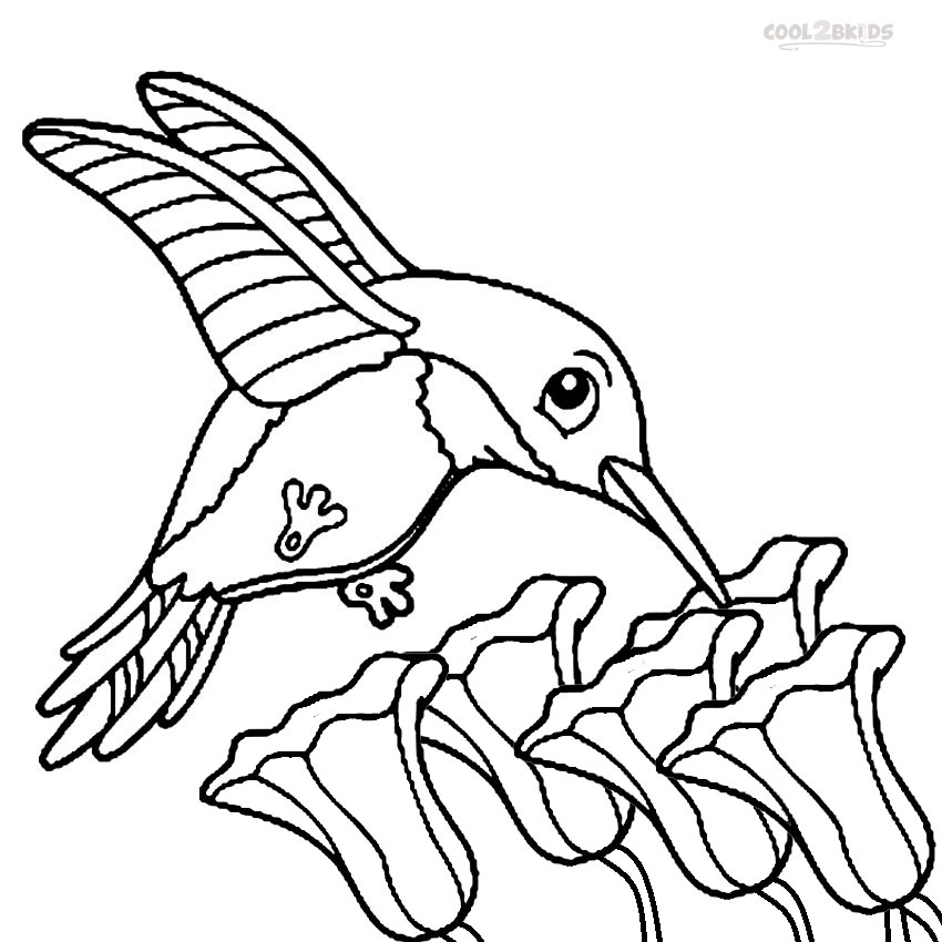 850x850 Printable Hummingbird Coloring Pages For Kids Cool2bKids