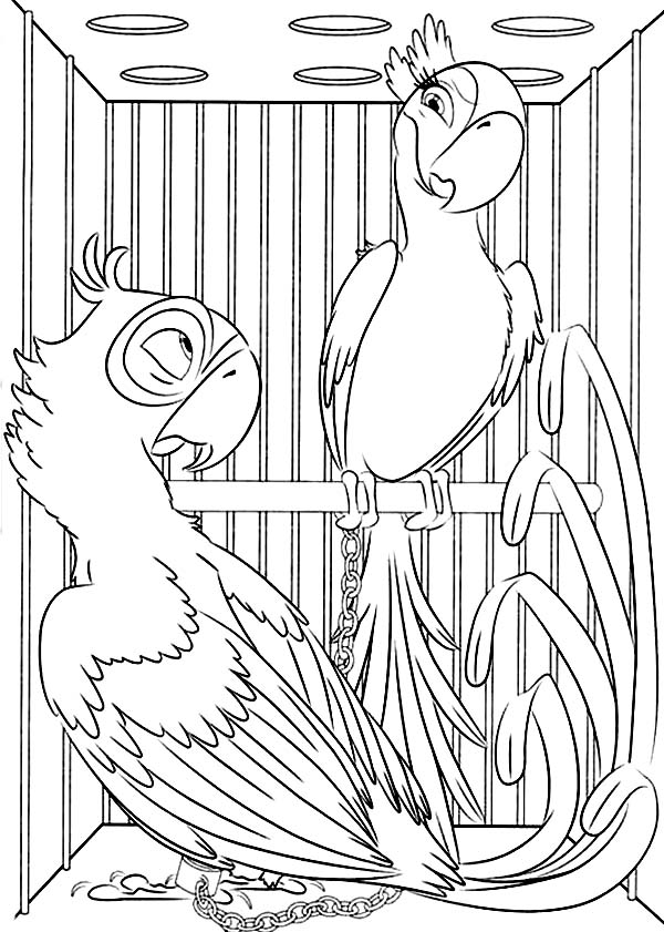 600x841 Blu And Jewel Stuck In The Same Cage In Rio Movie Coloring Pages