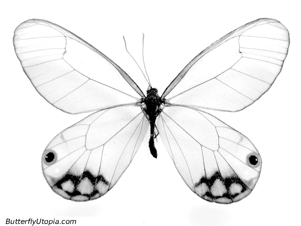 1024x768 Sketches Of Butterflies Clipart On Bird Cages Digital