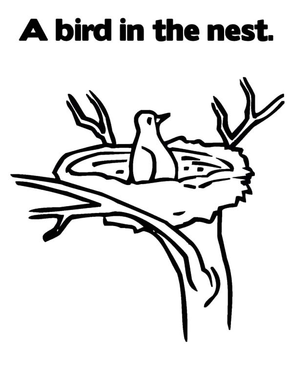 Bird In A Nest Drawing at GetDrawings | Free download