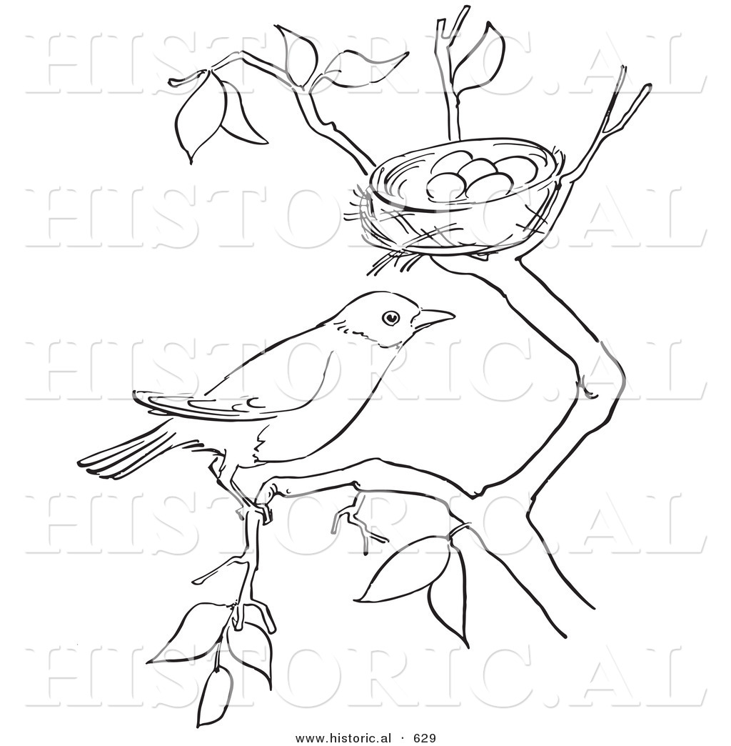 Bird In A Nest Drawing at GetDrawings.com | Free for personal use ...