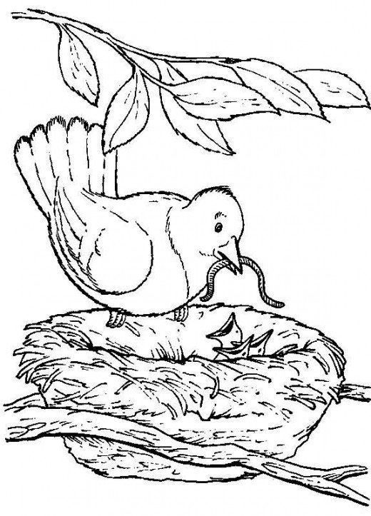 1713x1800 Antique Bird Nest Illustration 520x723 Backyard Animals And Nature Coloring Books Free Pages