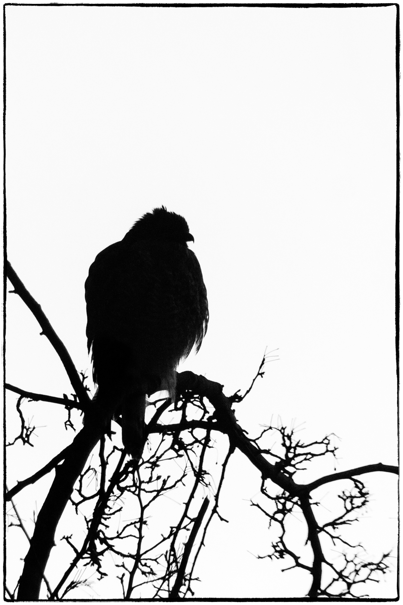 1553x2330 Bird In A Tree Photography, Images And Cameras