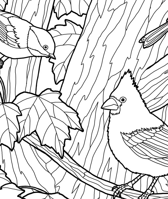 584x691 forest wildlife art autumn birds adult coloring page
