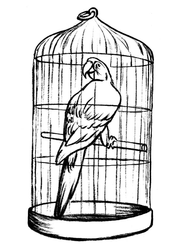 600x847 Parrot In Bird Cage For Sale Coloring Pages Jaula Expositor