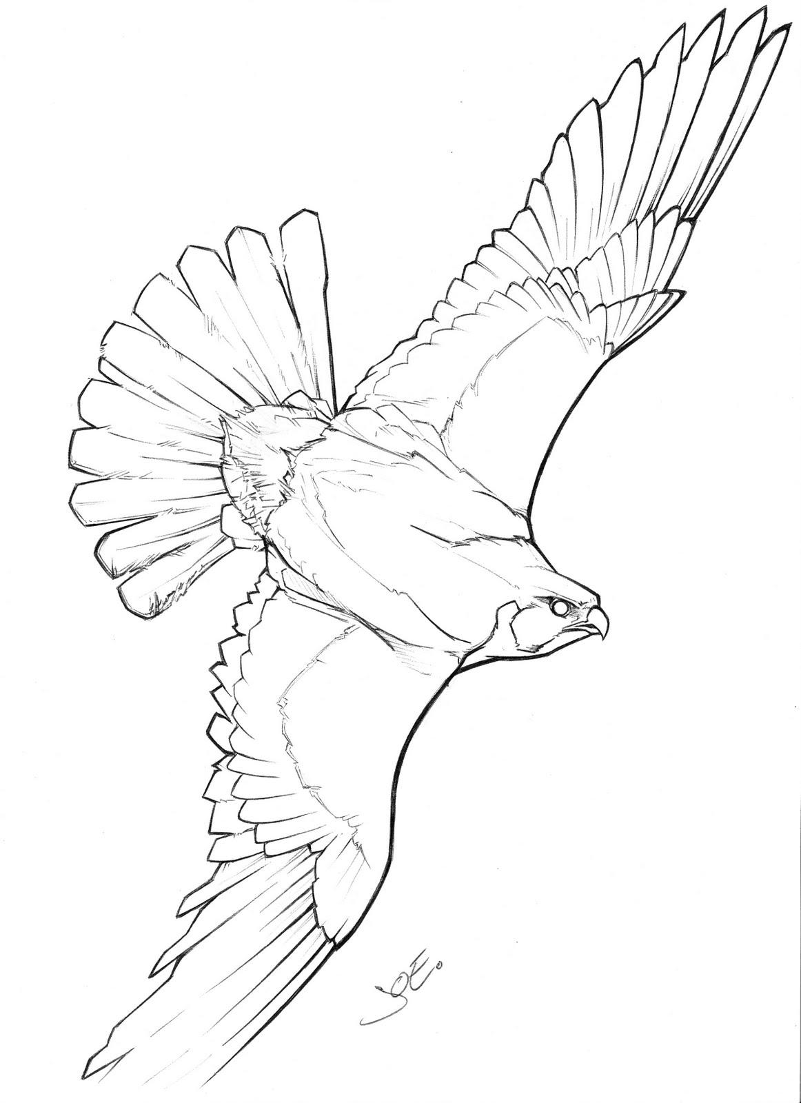 1162x1600 Drawing Of A Falcon Falcon