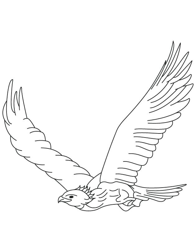 630x810 Eagle Color Page Golden Eagle In Flight Coloring Page Harpy Eagle