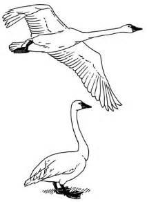 213x292 Bird Flying Drawing Flying Bird Litle Pups, Flying Swan Drawing