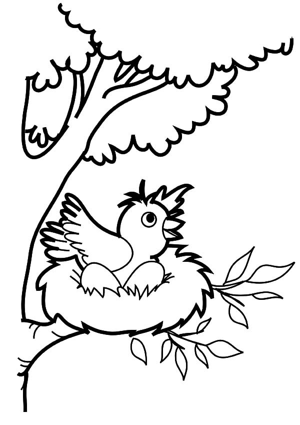 It's just a photo of Simplicity nest coloring pages