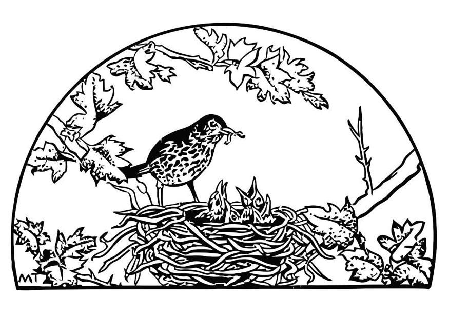 875x620 Coloring Page Bird39s Nest