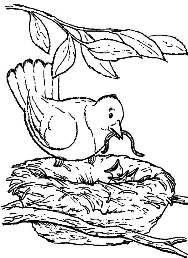 TPWD Kids: Ruby-throated Hummingbird |Hummingbird Nest Coloring Page