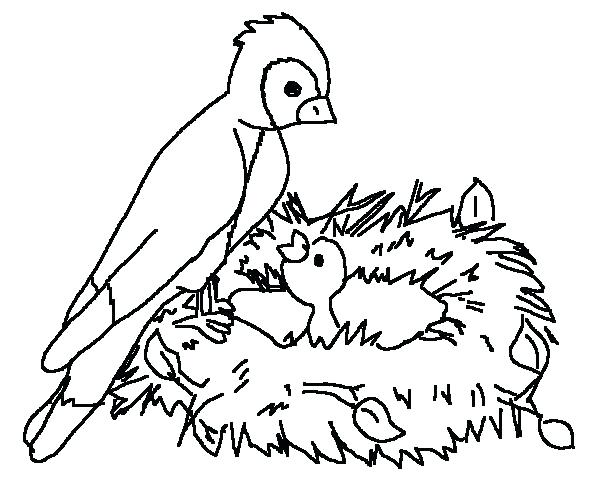 American Robin Bird Nest Coloring Page - Worksheet & Coloring Pages