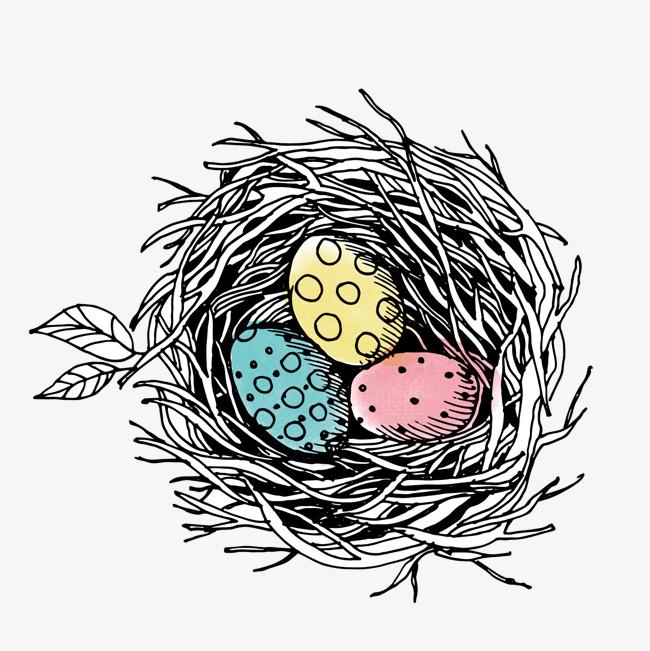 650x651 Vector Bird Nest Color Bird Illustration, Bird Nest, Egg, Vector