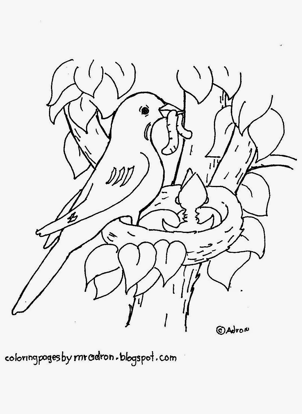Bird In Nest Drawing at GetDrawings.com | Free for personal use Bird ...
