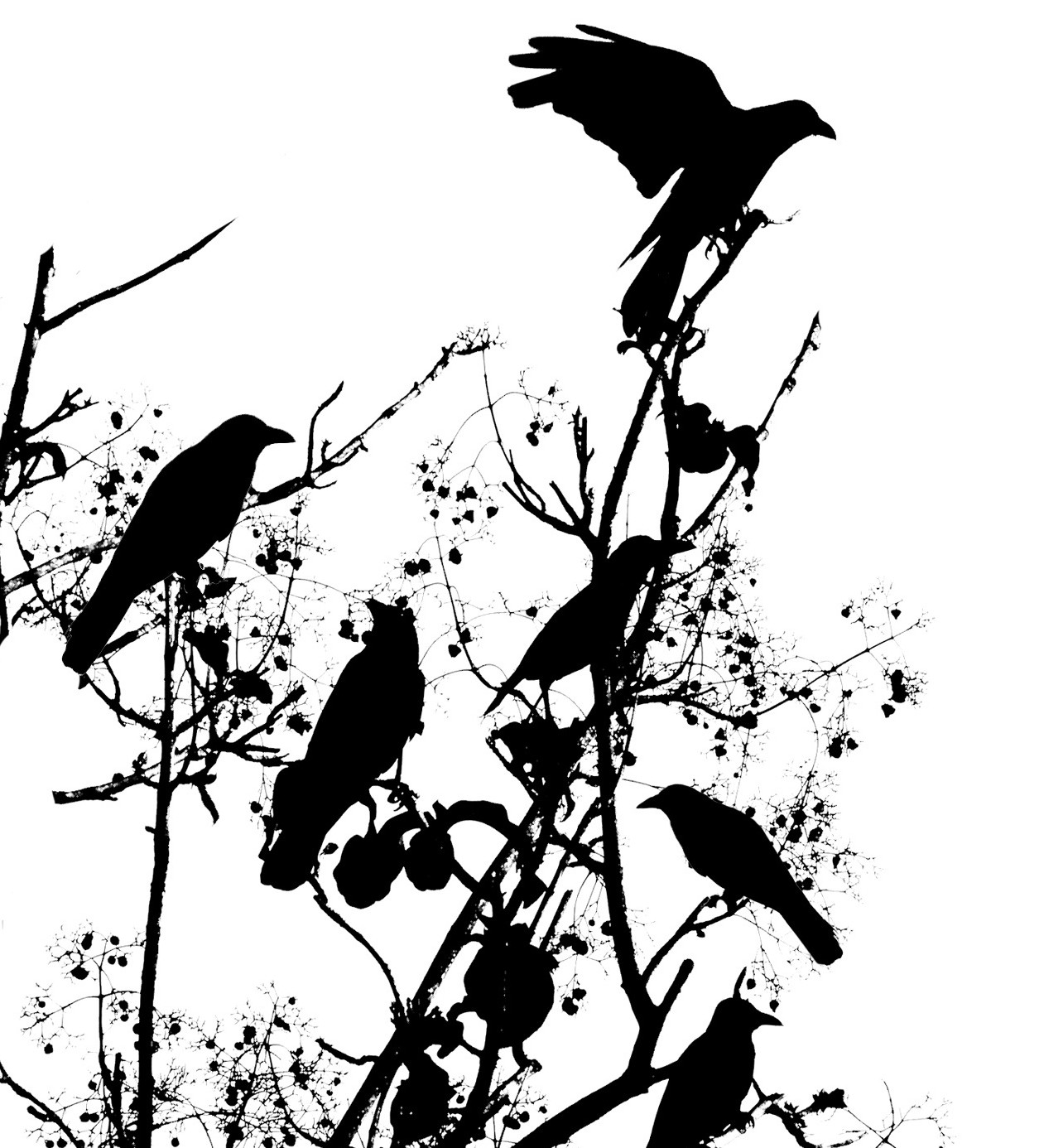 1255x1386 Collection Of Crow On Tree Branch Tattoo Drawing
