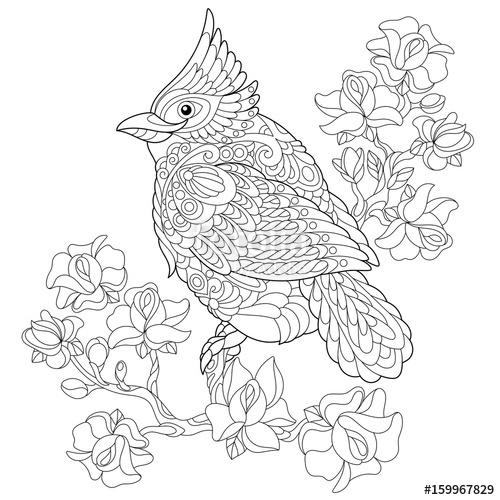500x500 Coloring Book Page Of Northern Red Cardinal Bird Sitting On Cherry