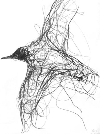 350x467 Gallery Bird Drawings Sketches,