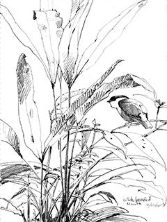 240x320 Perched On A Page The Bird Sketches Of Debby Kaspari