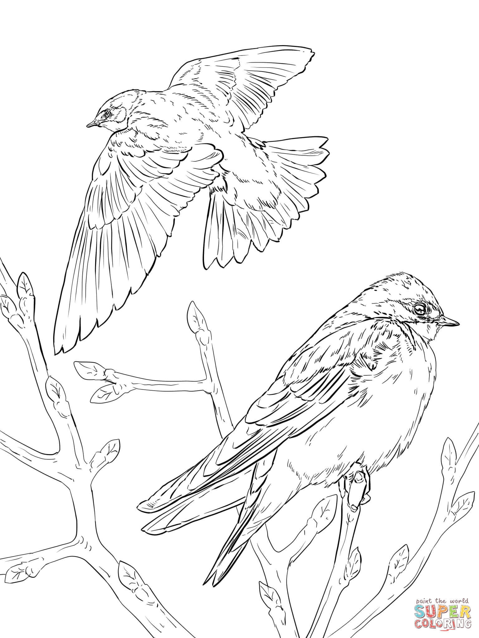 1536x2048 Realistic Tree Swallows Coloring Page In Bird Pages