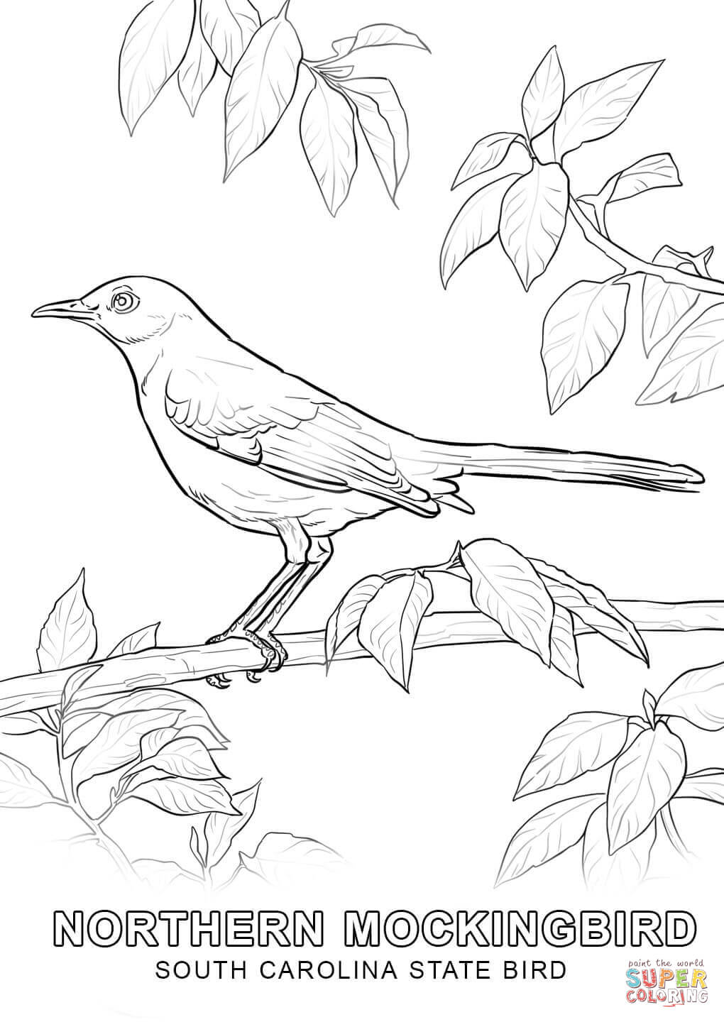 1020x1440 South Carolina State Bird Coloring Page Free Printable Coloring