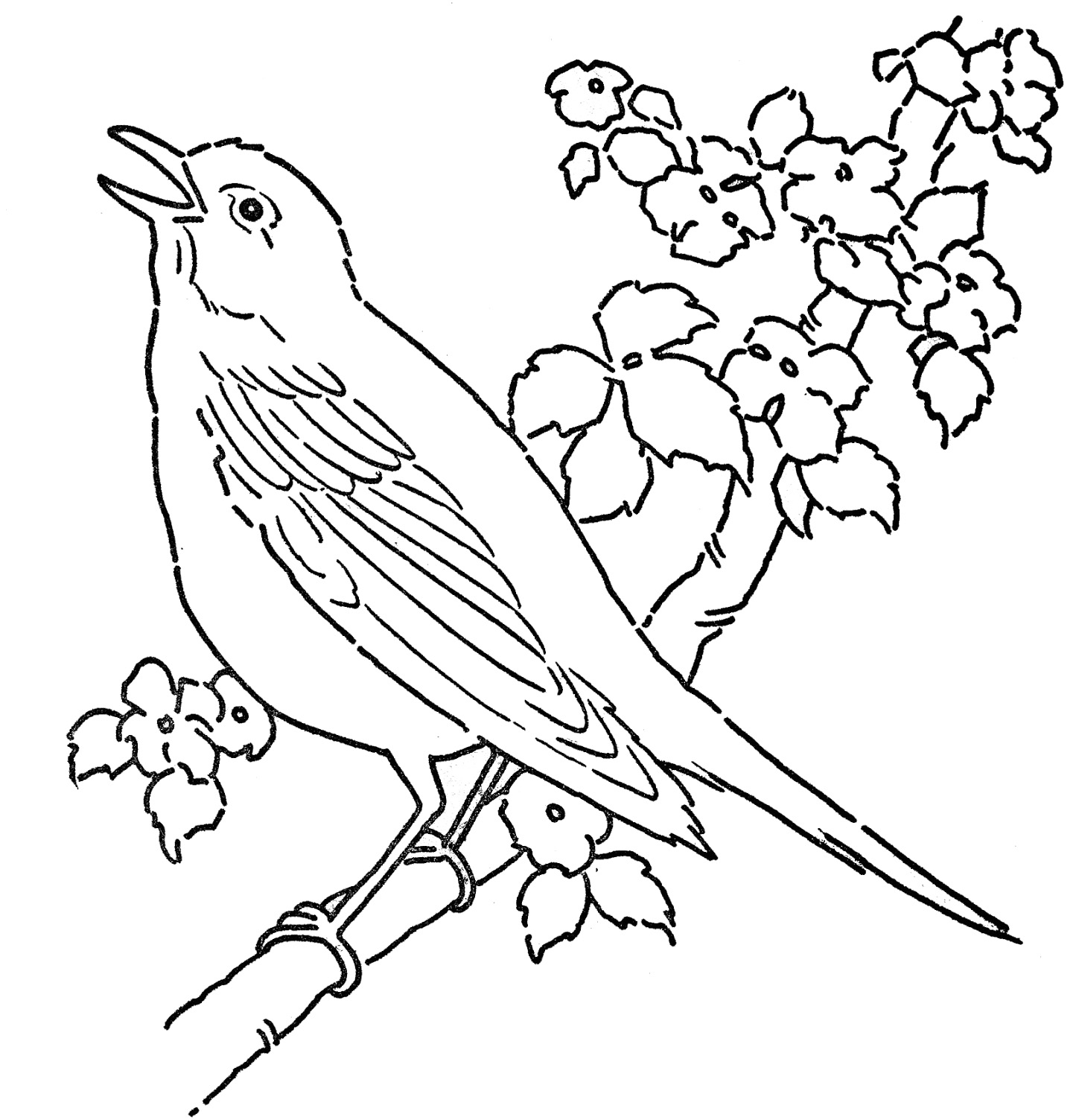 1449x1504 Birds Coloring Pages