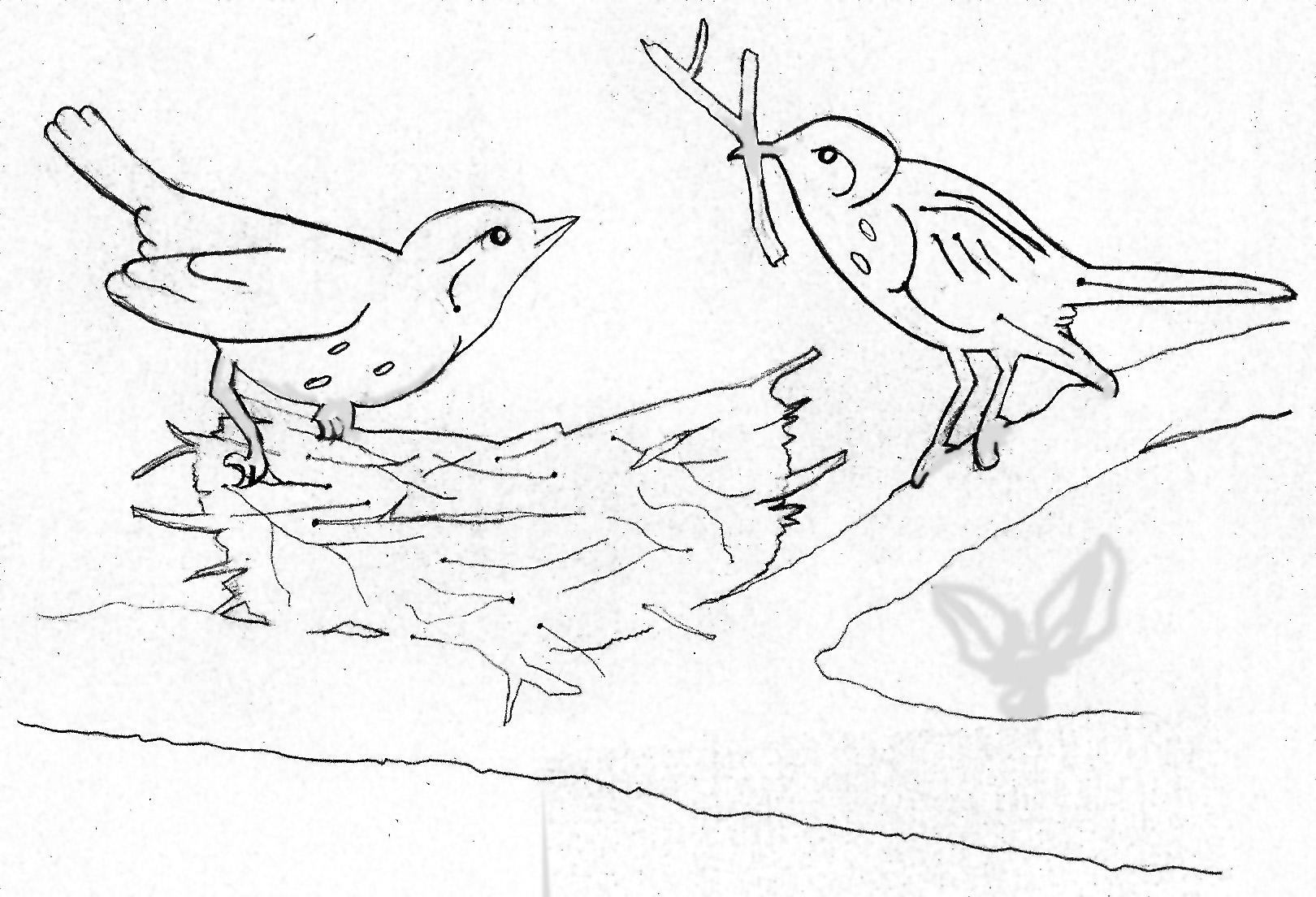Bird Nest Drawing