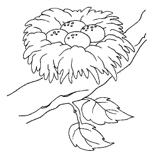 600x616 Practical Bird Nest Coloring Page Nzherald Co