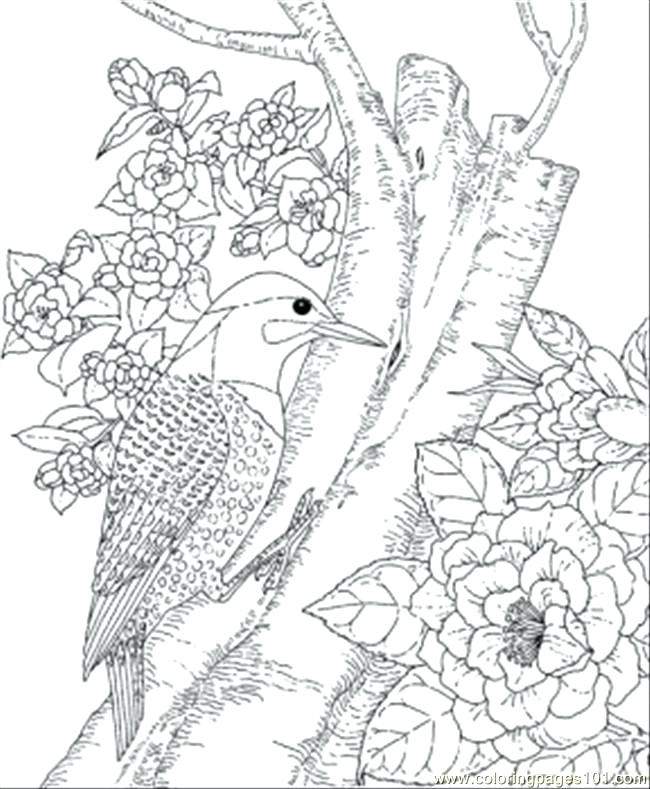 650x789 Coloring Pages Bird State Page Angry