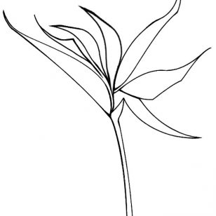 308x308 Images Of Saguaro Coloring Pages New Pictures Tulip Free Download