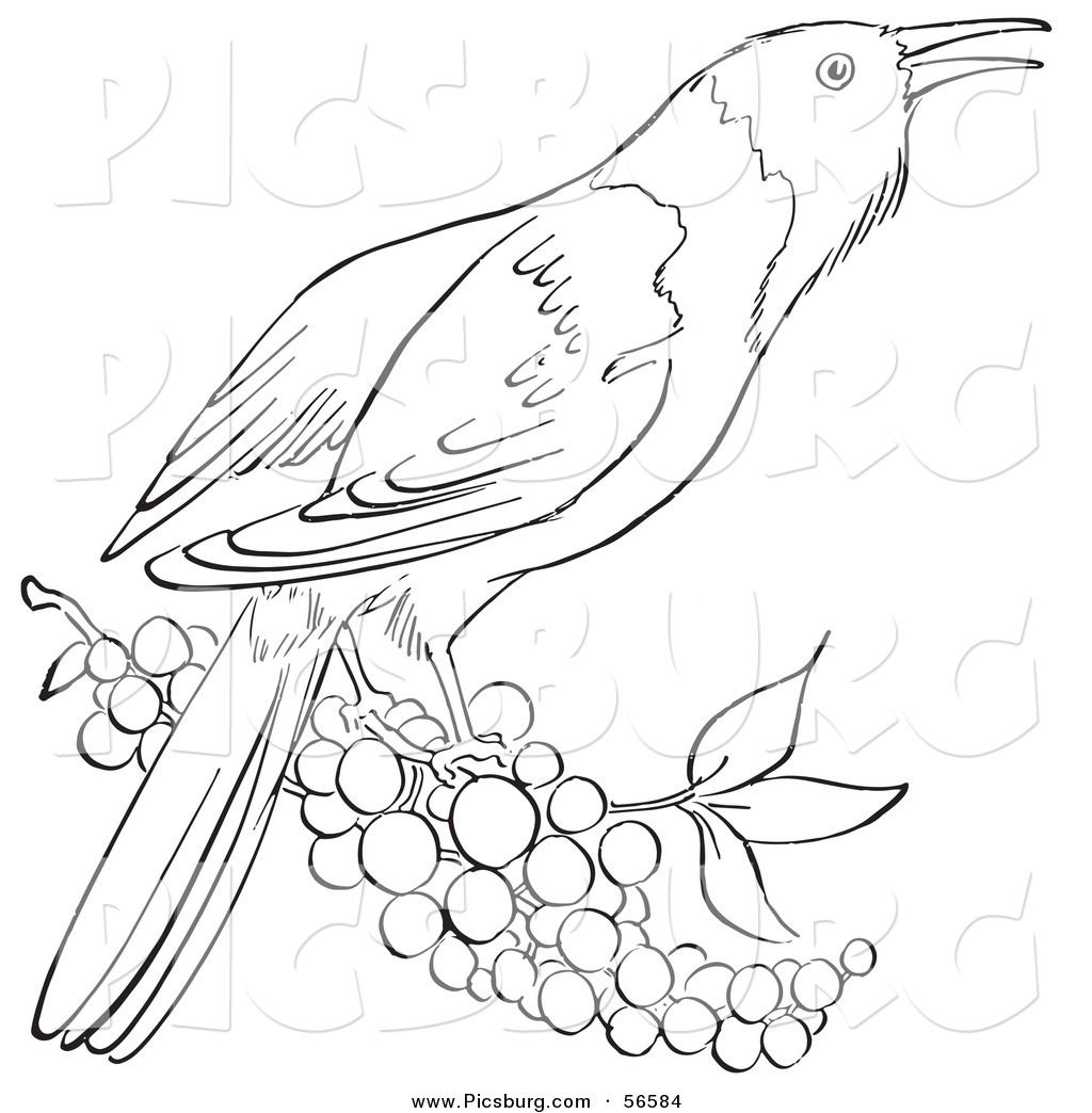1024x1044 Birds On A Branch Clipart Black And White Collection