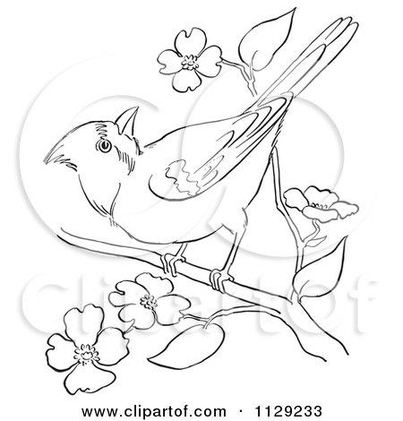 450x470 Cartoon Clipart Of An Outlined Cardinal Bird On A Blossom Branch