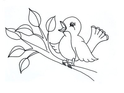 400x300 Coloring Pages For Kids Learn To Color BIRDS How Draw