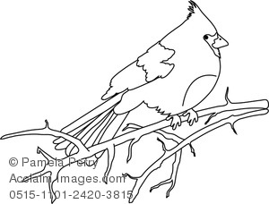300x228 Art Illustration Of A Cardinal Sitting On A Branch Coloring Page