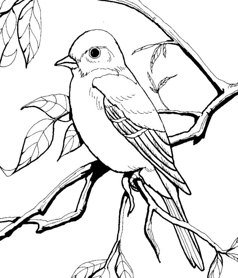 800x932 Drawn Brds Perched Bird