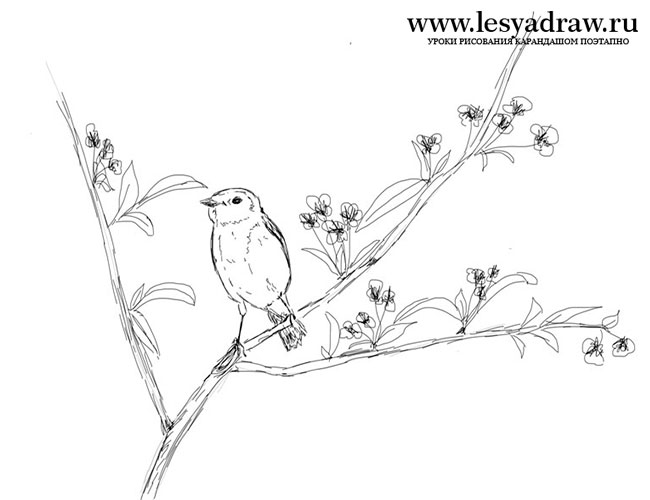 650x500 How To Draw A Bird On A Branch