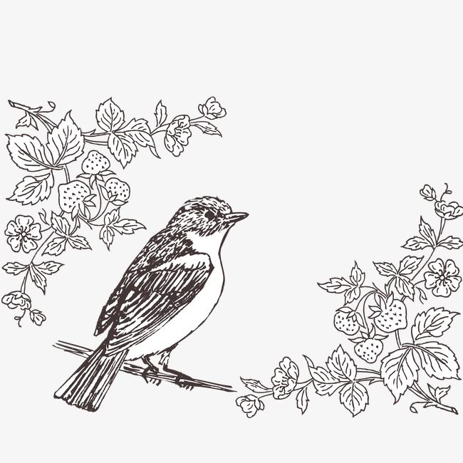 650x650 Line Drawing Bird, Black, Line Drawing, Flower Png And Vector