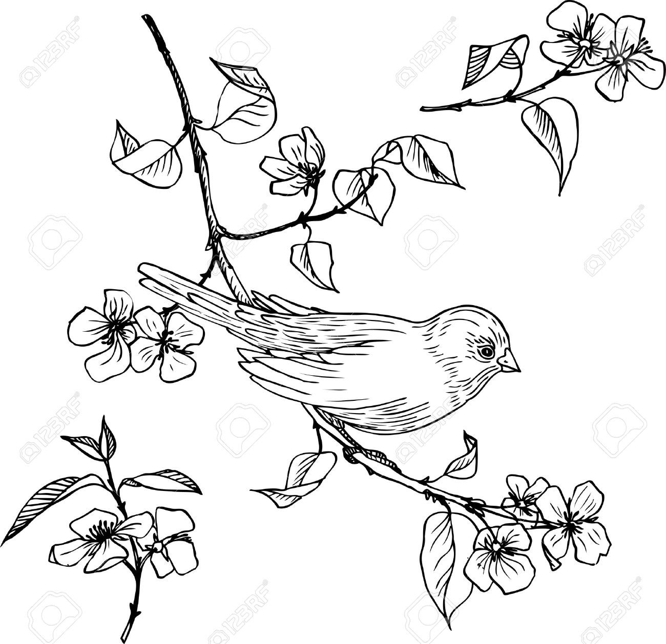 1300x1258 Linear Drawing Bird At Branch With Flowers And Leaves, Set Of Hand