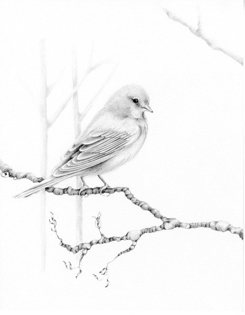 498x640 Print Bird Drawing Giclee Fine Art Print Of My Original Pencil