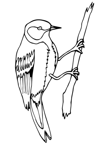 360x480 Wren Bird On A Branch Coloring Page Free Printable Coloring Pages