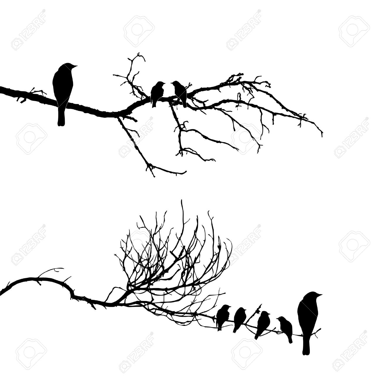 1300x1300 Bird On Tree Drawing Images For Gt Bird On Tree Branch Drawing
