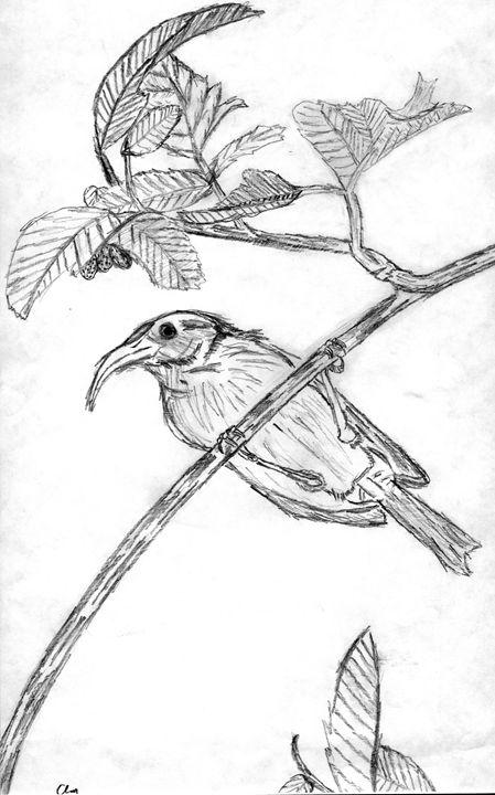 449x720 Bird On Branch Sketch
