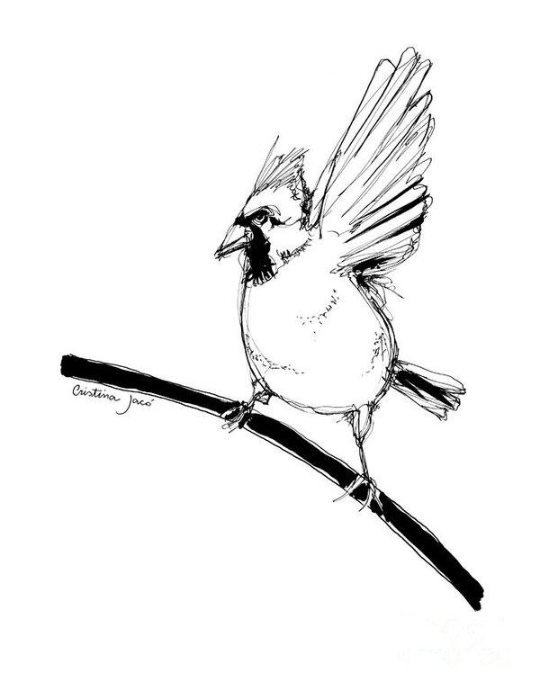 600x768 Cardinal Bird Drawings