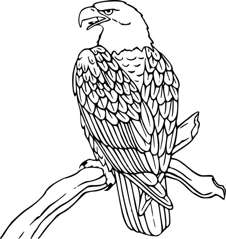 736x779 Drawn White Tailed Eagle Easy