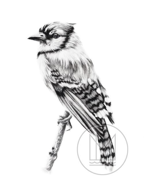 500x658 Avian Mississippinorth