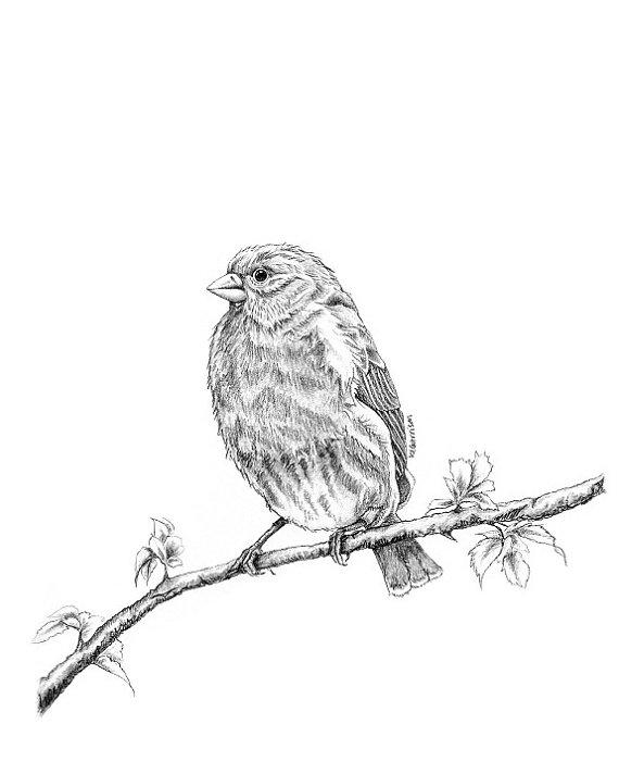 570x712 Items Similar To Bird Prints, Finch Art, Bird Art, Bird Art Print