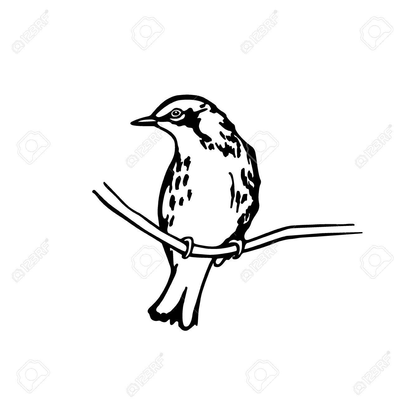 1300x1300 Vector Illustration Of Hand Drawn North America Bird Sitting