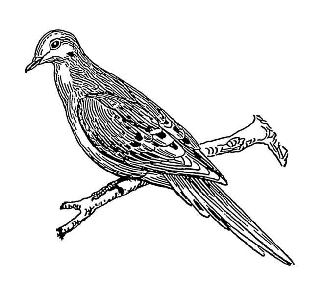659x600 Bird Branch Break Wings