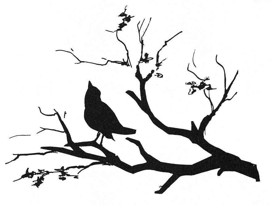 900x664 Bird On Branch Drawing