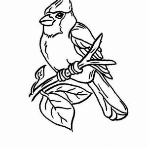 300x300 Cardinal Bird Perch On Tree Branch Coloring Page Sun