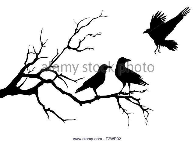 640x468 Vector Silhouette Bird On Branch Stock Photos Amp